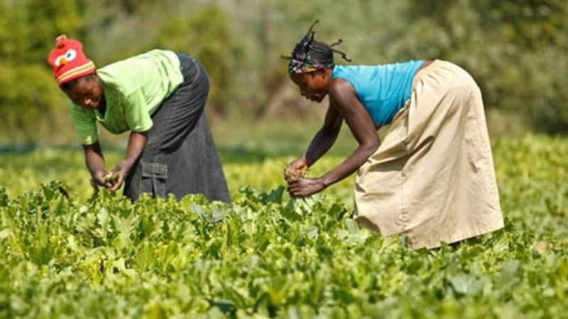 Le Maniema parmi les 4 provinces bénéficiaires de 100 millions de dollars de Fida pour un nouveau projet agricole