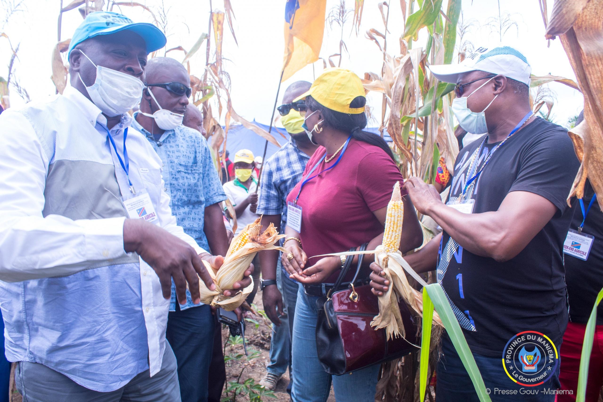 Maniema: le gouvernement provincial compte transformer le maïs en farine pour commercialiser et influencer le prix du marché